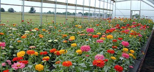 Kesme çiçek 230 bin kişiyi geçindiriyor