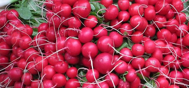 Fındık Turpu Hasadı (Harvestıng Radıshes by Machıne)