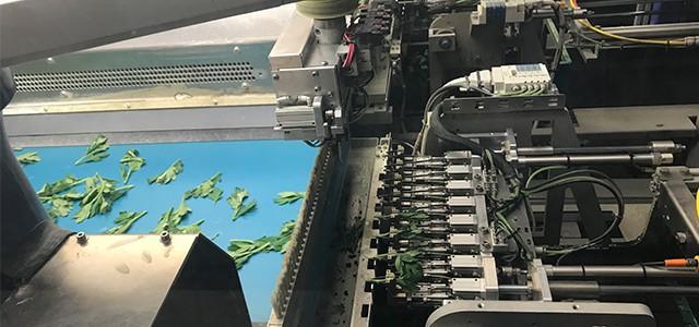 Krizantemde Çelik Dikme Robotu (Chrysanthemum Cuttıng Stıckıng Robot System)